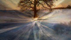 divinetree